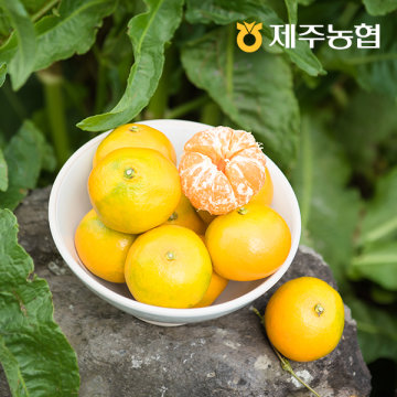 [감귤데이1+1] 귤로장생 새콤달콤 노지감귤4.5kg 로얄과